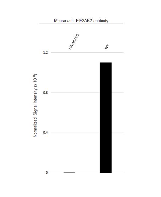 Anti EIF2AK2 Antibody, clone 1441CT628.33.40 (PrecisionAb Monoclonal Antibody) thumbnail image 3