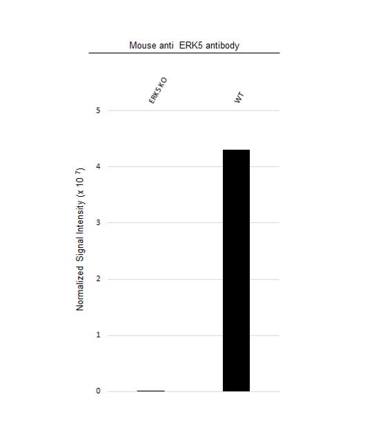 Anti ERK5 Antibody, clone OTI3D4 (PrecisionAb Monoclonal Antibody) thumbnail image 3