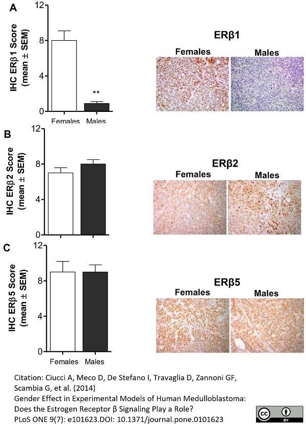 Anti Human Estrogen Receptor Beta 2 Antibody, clone 57/3 thumbnail image 4