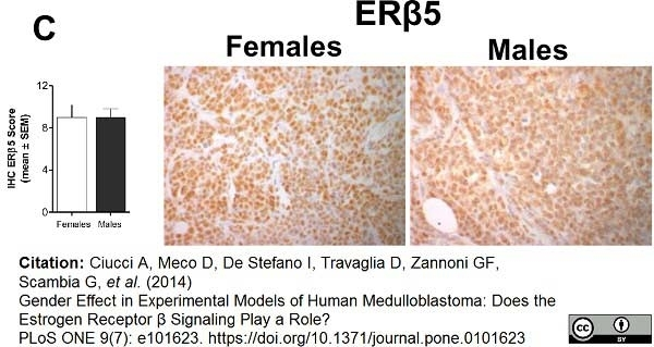 Anti Human Estrogen Receptor Beta 5 Antibody, clone 5/25 thumbnail image 5