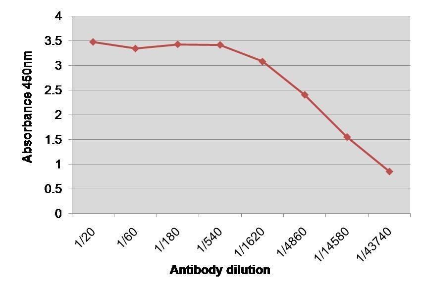 Anti Human Factor VIII Antibody, clone RFF-VIIIC/8 thumbnail image 1