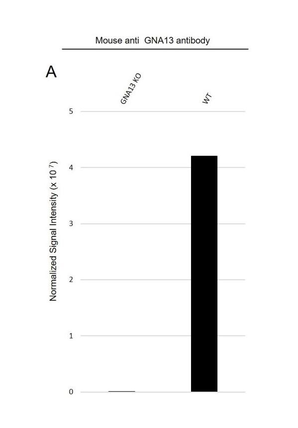 Anti GNA13 Antibody, clone CD02/3A3 (PrecisionAb Monoclonal Antibody) thumbnail image 3
