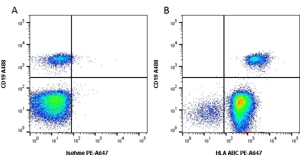 Anti Human HLA ABC Antibody, clone W6/32 thumbnail image 3