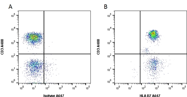 Anti Human HLA B7 Antibody, clone BB7.1 thumbnail image 3
