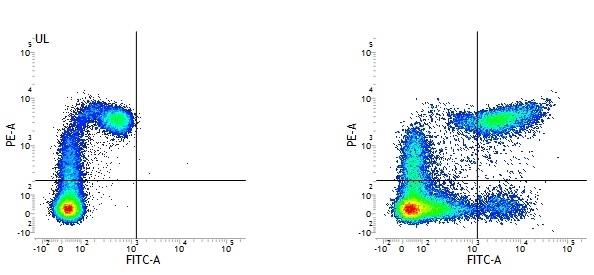 Anti Human HLA DP DQ DR Antibody, clone WR18 thumbnail image 1