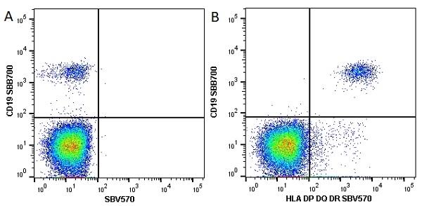 Anti Human HLA DP DQ DR Antibody, clone WR18 thumbnail image 13