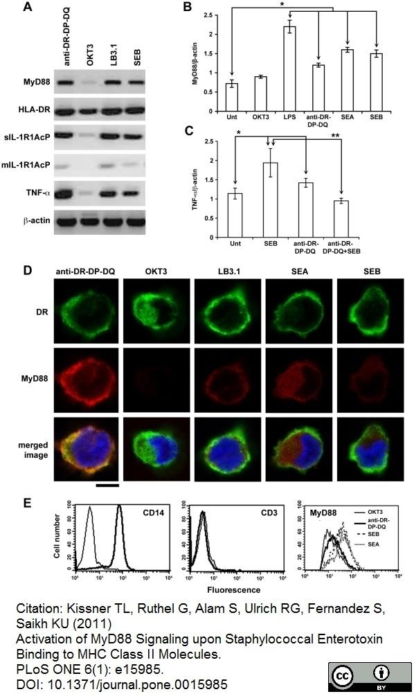 Anti Human HLA DP DQ DR Antibody, clone WR18 thumbnail image 5