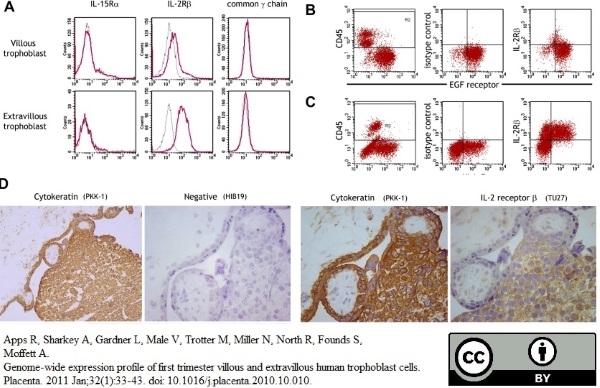 Anti Human HLA G Antibody, clone MEM-G/9 thumbnail image 4