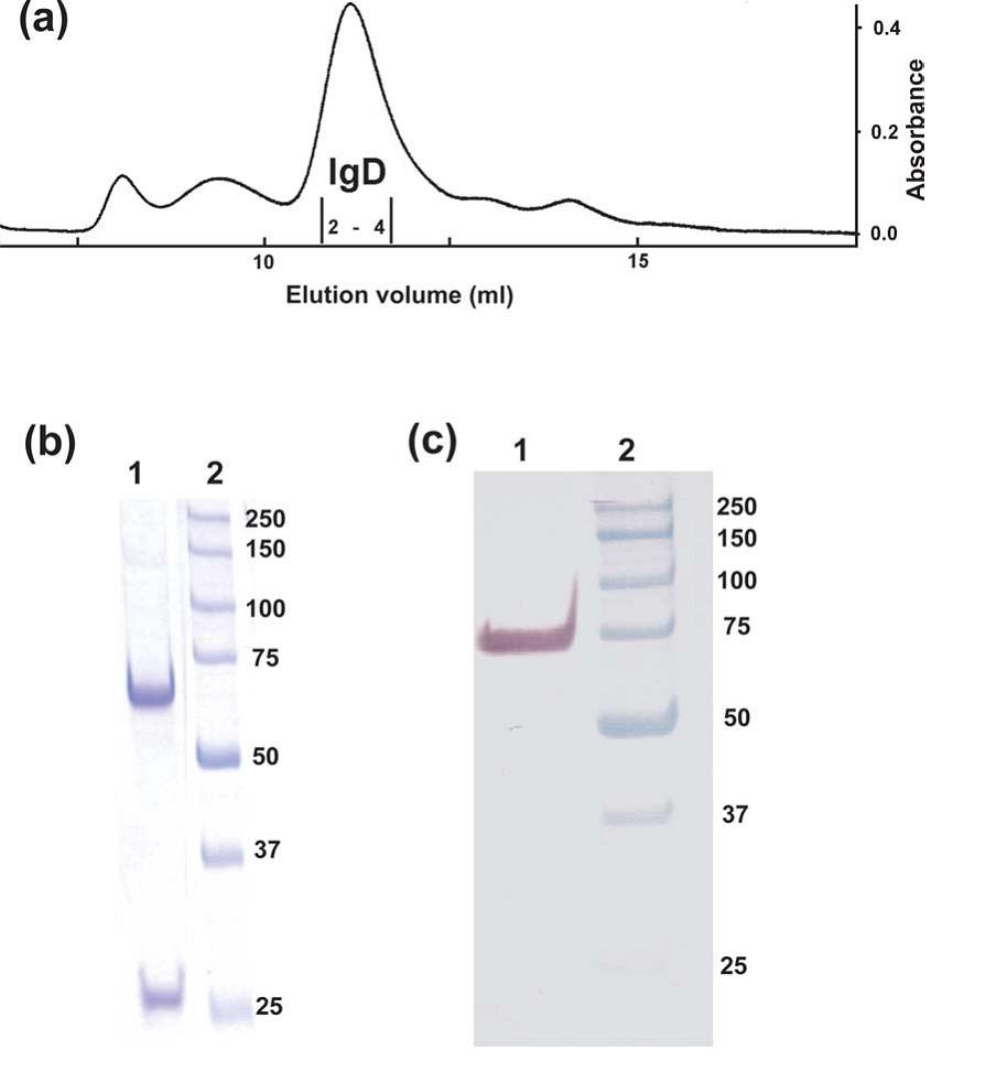 Anti Human IgD (Fc) Antibody, clone LE2 gallery image 1