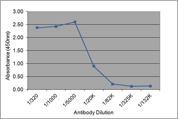 Anti Human Insulin-Like Growth Factor I Antibody, clone 175.2E7 gallery image 1