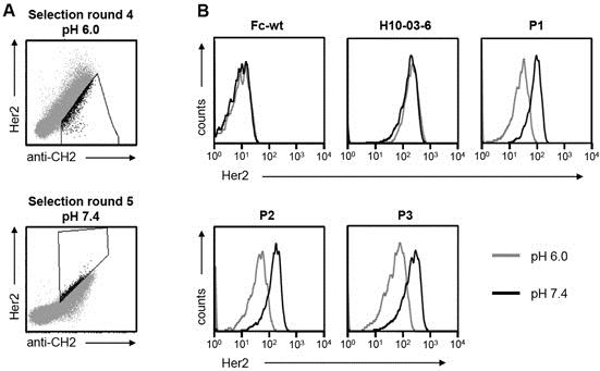 Anti Human IgG (Fc) CH2 Domain Antibody, clone MK 1 A6 thumbnail image 2