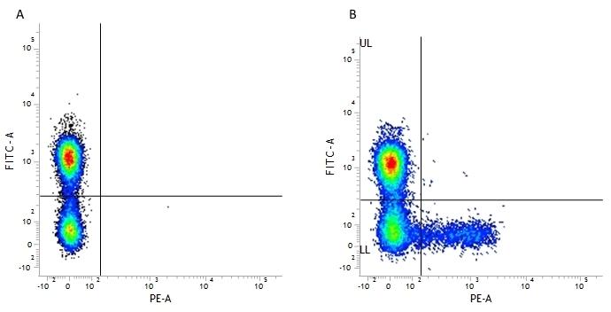 Anti Human KIR Antibody, clone NKVFS1 thumbnail image 1