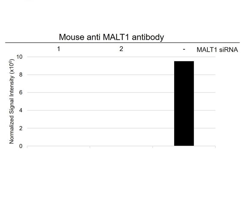 Anti MALT1 Antibody, clone 50 (PrecisionAb Monoclonal Antibody) thumbnail image 4