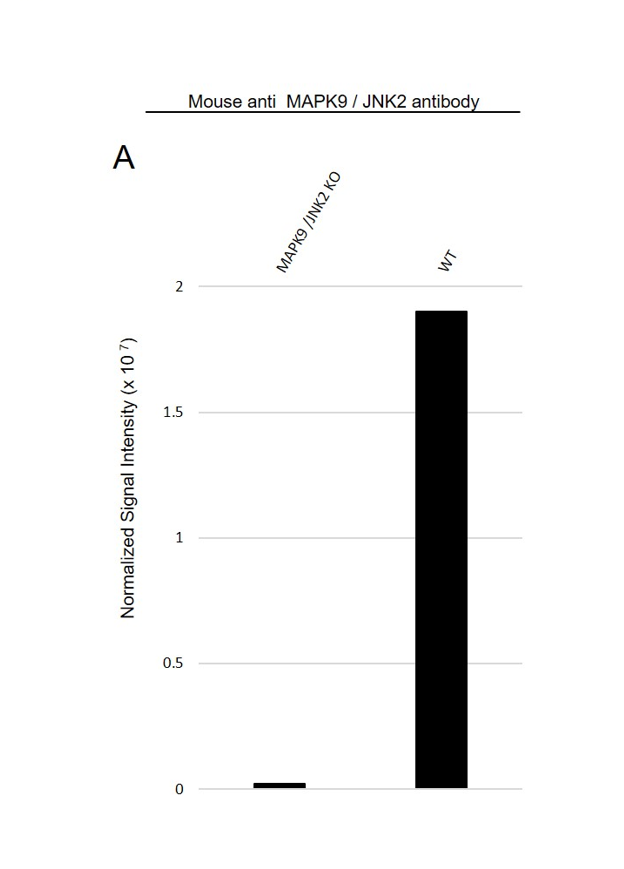Anti MAPK9 / JNK2 Antibody, clone OTI1A1 (PrecisionAb Monoclonal Antibody) thumbnail image 3