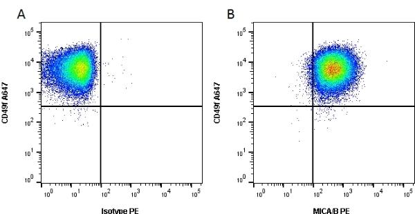 Anti Human MICA/Micb Antibody, clone 6D4 gallery image 1