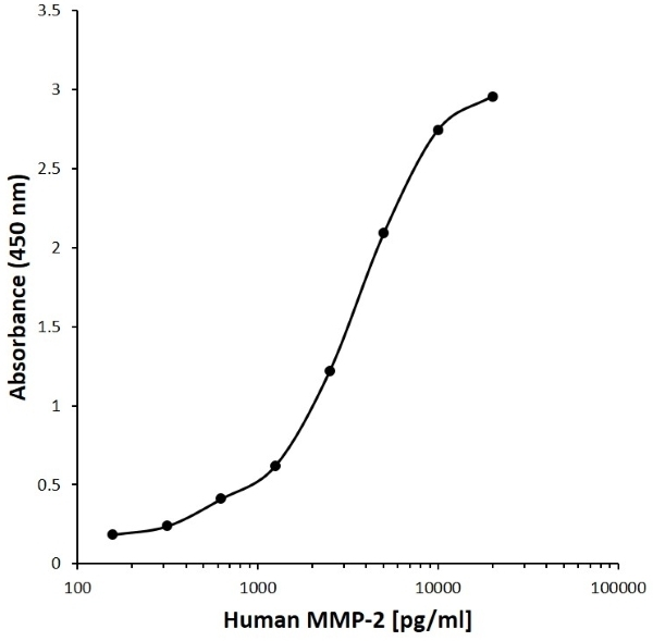 Anti Human MMP-2 Antibody, clone J08-3B10 gallery image 1