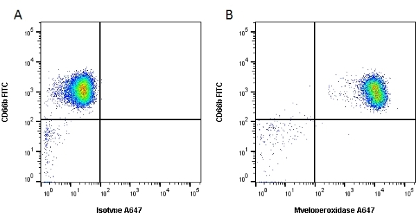 Anti Human Myeloperoxidase Antibody, clone 2C7 thumbnail image 2
