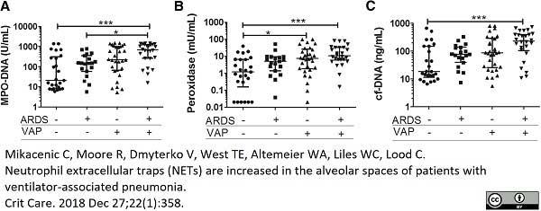 Anti Human Myeloperoxidase Antibody, clone 4A4 gallery image 1
