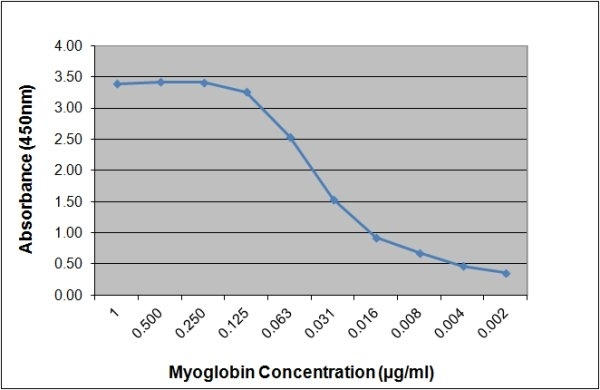 Anti Human Myoglobin Antibody, clone 164.3A4 gallery image 1