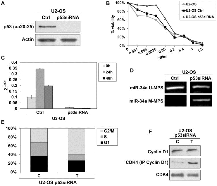 Anti p53 (aa20-25) Antibody, clone DO-1 thumbnail image 2