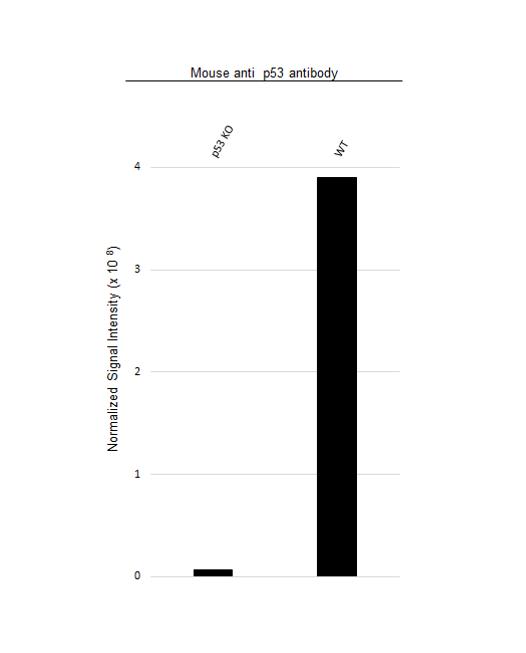 Anti p53 Antibody, clone DO-1 (PrecisionAb Monoclonal Antibody) thumbnail image 4