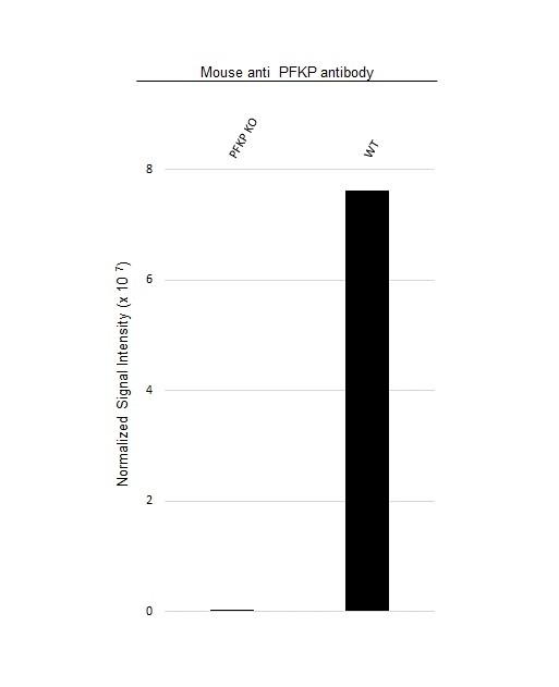 Anti PFKP Antibody, clone OTI1F2 (PrecisionAb Monoclonal Antibody) thumbnail image 2