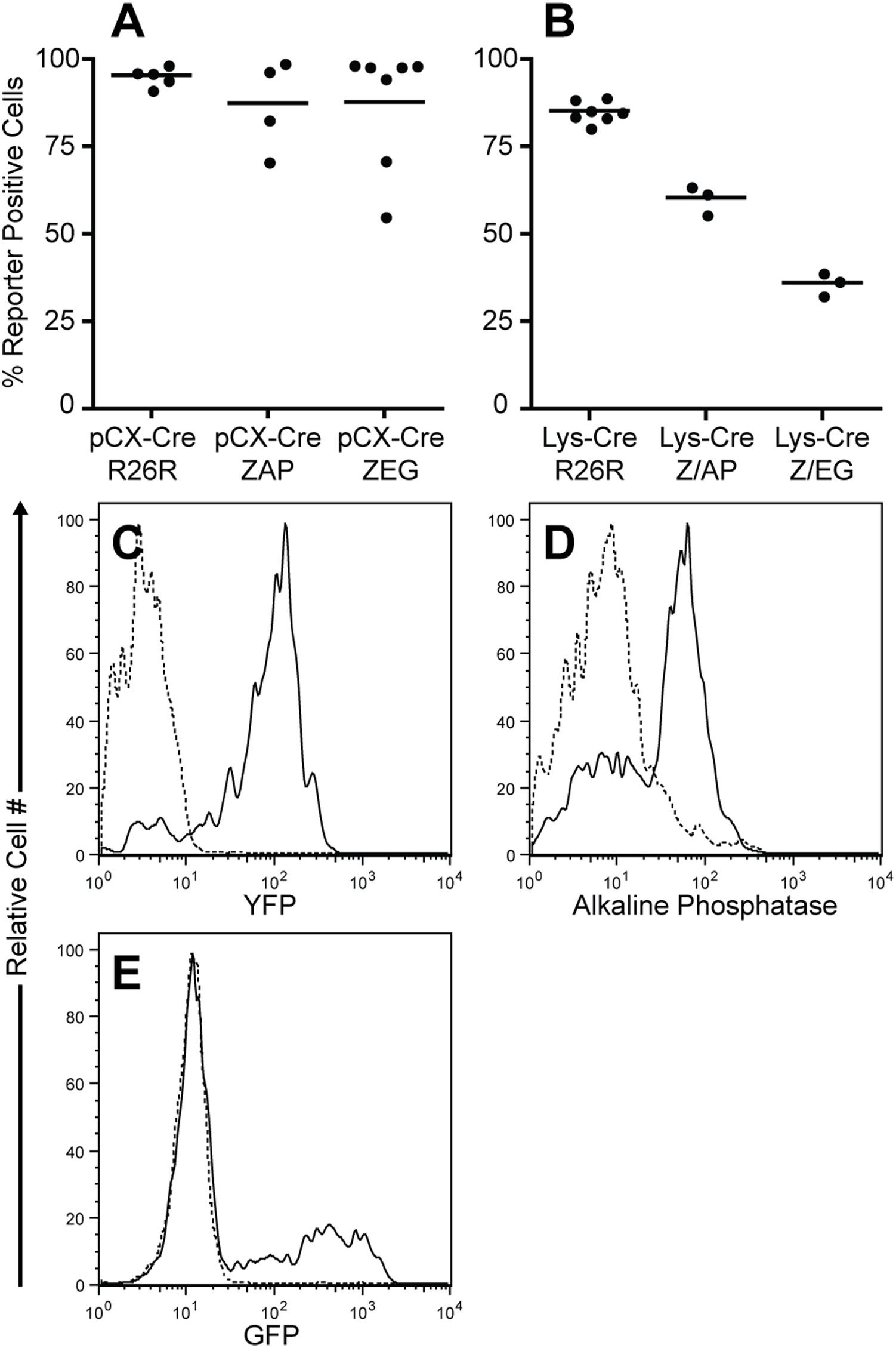 Anti Human Placental Alkaline Phosphatase Antibody, clone H17E2 gallery image 1