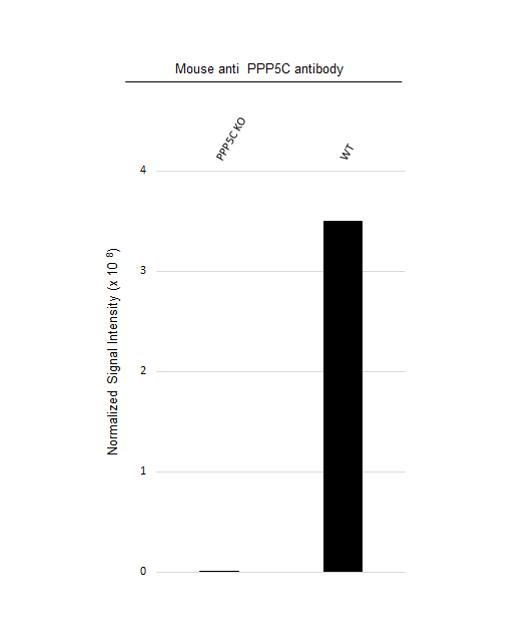 Anti PPP5C Antibody, clone OTI5G5 (PrecisionAb Monoclonal Antibody) thumbnail image 3