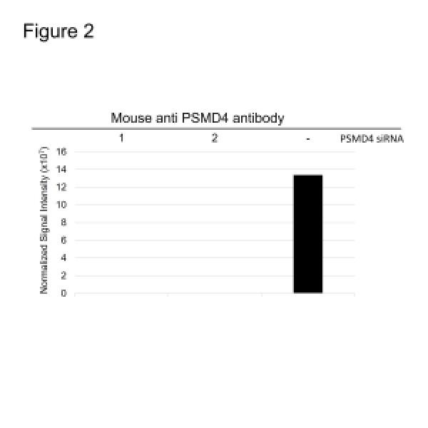 Anti PSMD4 Antibody, clone CPTC12 (PrecisionAb Monoclonal Antibody) thumbnail image 3