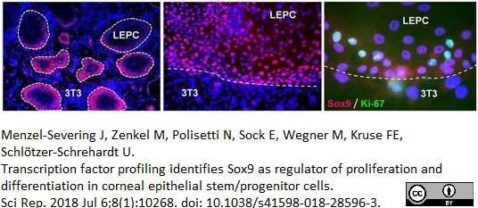 Anti Human SOX9 Antibody, clone 3C10 thumbnail image 8