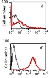 Anti Human Sphingosine 1- Phosphate Receptor 1 Antibody, clone 2B9 thumbnail image 1