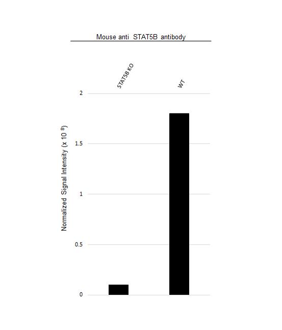Anti STAT5B Antibody, clone 5B3 (PrecisionAb Monoclonal Antibody) thumbnail image 3