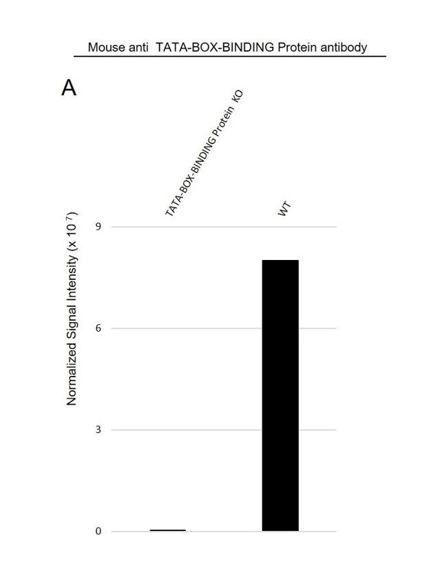 Anti TATA-BOX-BINDING Protein Antibody, clone 830CT4.3.3 (PrecisionAb Monoclonal Antibody) thumbnail image 3