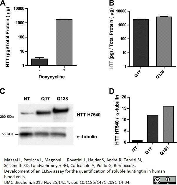 Anti Huntingtin Antibody, clone HDB4E10 thumbnail image 4