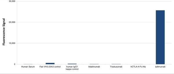 Anti Ipilimumab Antibody, clone AbD34433 thumbnail image 1