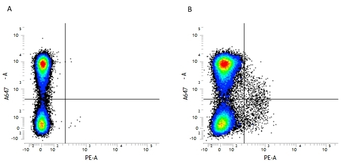 Anti Mouse CD117 Antibody, clone 2B8 gallery image 1