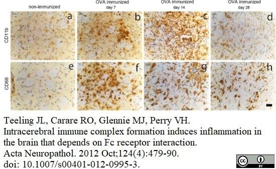 Anti Mouse CD11b Antibody, clone 5C6 thumbnail image 18