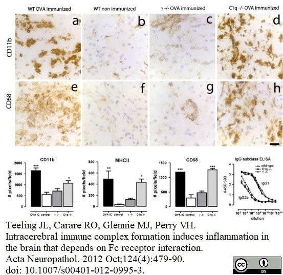 Anti Mouse CD11b Antibody, clone 5C6 thumbnail image 21
