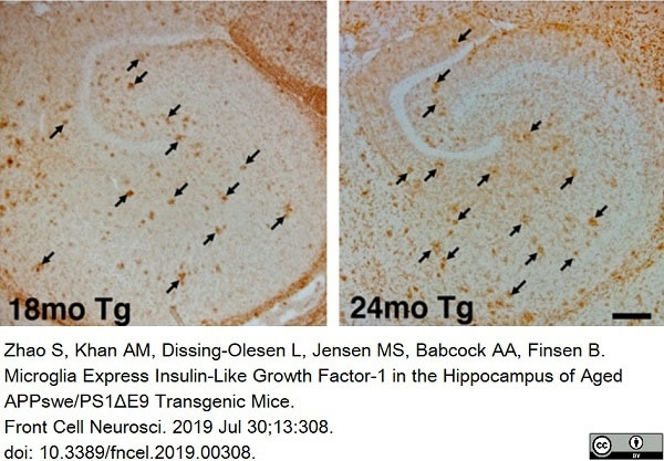 Anti Mouse CD11b Antibody, clone 5C6 thumbnail image 23