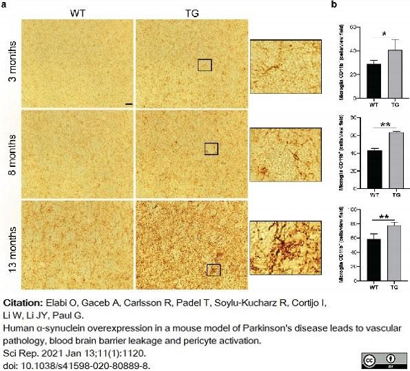 Anti Mouse CD11b Antibody, clone 5C6 thumbnail image 32