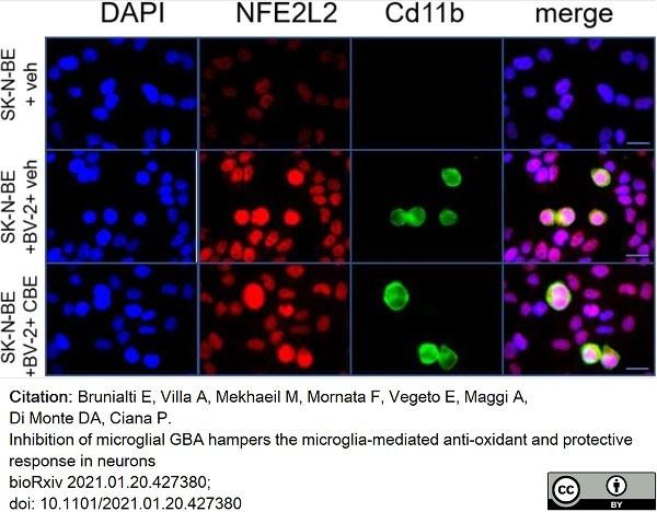 Anti Mouse CD11b Antibody, clone 5C6 thumbnail image 33