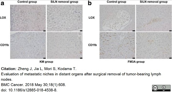 Anti Mouse CD11b Antibody, clone 5C6 thumbnail image 36