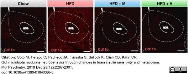 Anti Mouse CD11b Antibody, clone 5C6 thumbnail image 37