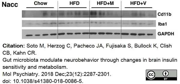 Anti Mouse CD11b Antibody, clone 5C6 thumbnail image 38