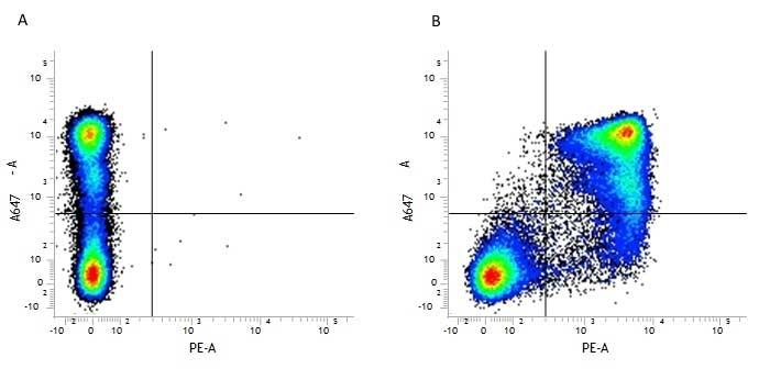 Anti Mouse CD11b Antibody, clone 5C6 thumbnail image 4