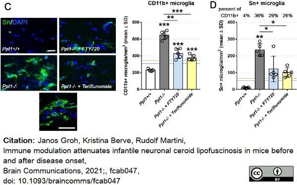 Anti Mouse CD11b Antibody, clone M1/70.15 thumbnail image 21