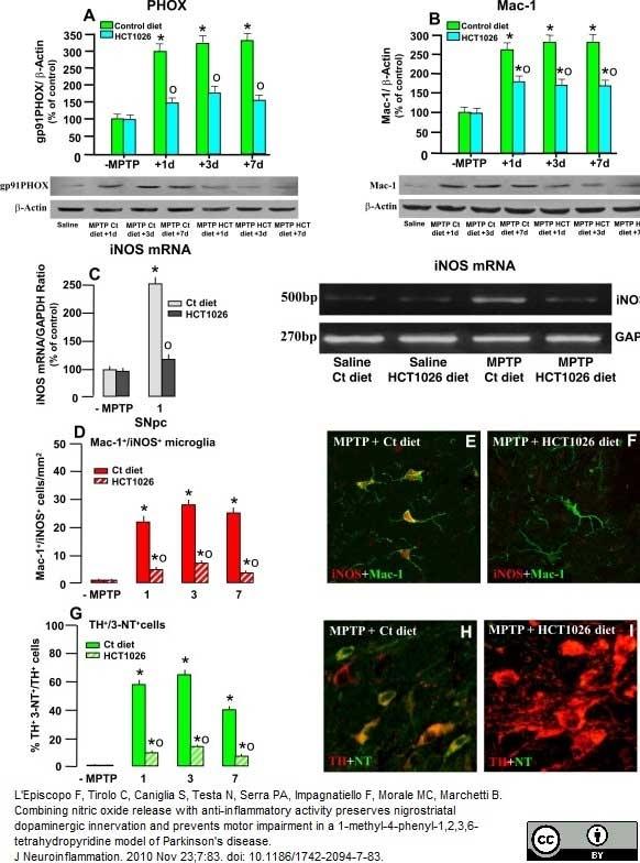 Anti Mouse CD11b Antibody, clone M1/70.15 thumbnail image 5