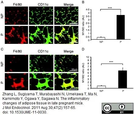 Anti Mouse CD11c Antibody, clone N418 thumbnail image 2