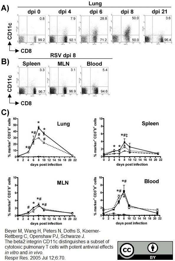 Anti Mouse CD11c Antibody, clone N418 thumbnail image 5