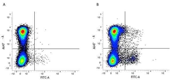 Anti Mouse CD11c Antibody, clone N418 thumbnail image 8